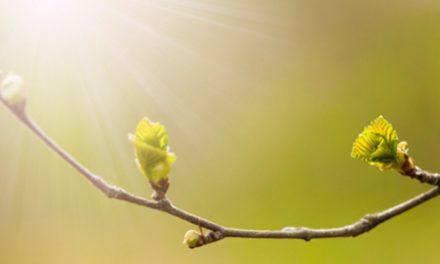 Un Curso de Milagros – Presentación talleres